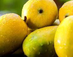 आम खाने के लाभ Benefits Of Eating Mango