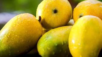 Benefits Of Eating Mango
